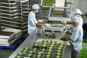 Kho lạnh bảo quản nông sản  - Lắp đặt kho lạnh bảo quản rau tại Hải Dương